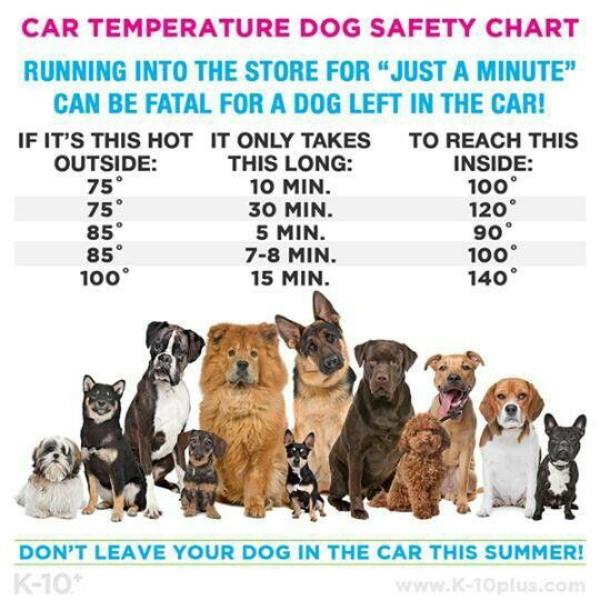 DON'T LEAVE YOUR DOG IN THE CAR IN SUMMER