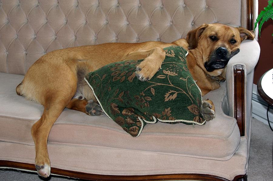bigstock_Dog_Making_Himself_At_Home