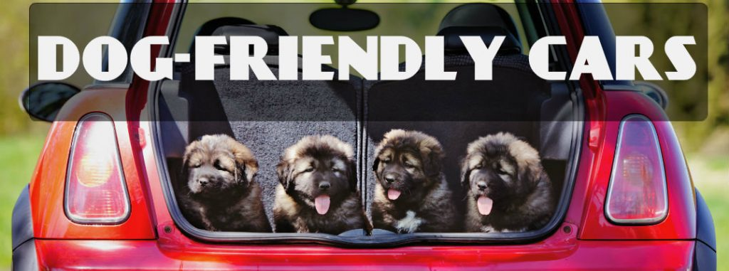 INNX dog-friendly-cars_